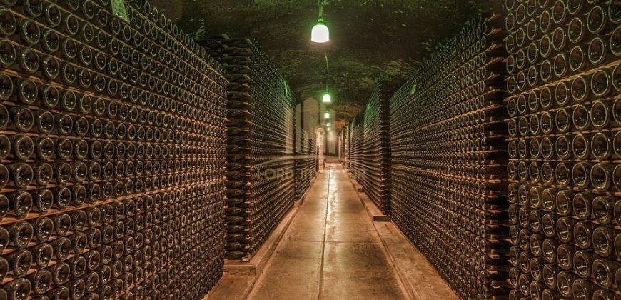 WINE CELLAR – BURGOS, SPAIN