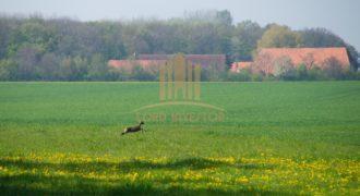 Private Hunting farm in Portugal